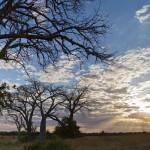 Gorongosa, Hidden Eden