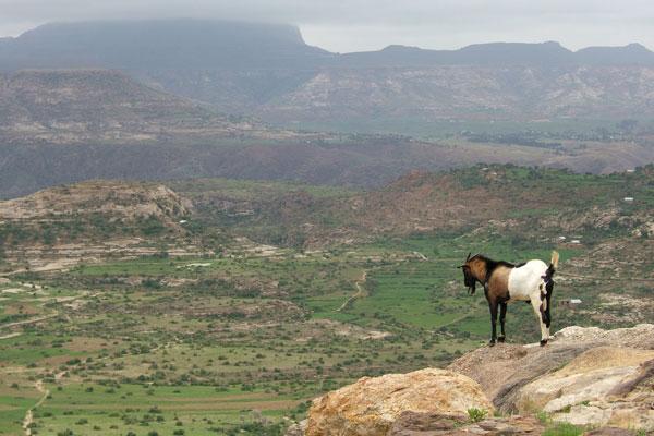 extreme ethiopia