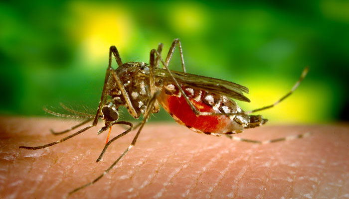 Yellow fever low risk in Southern Africa