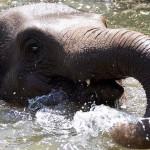 Dublin Zoo Asian Elephants