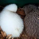 Breeding season at National Wildlife Centre