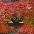 autumn glory Gliffaes