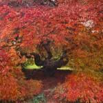 Autumn glory of Gliffaes tree trail