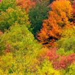 Mountain State Splendour