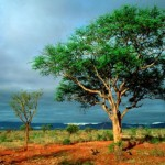 Kruger reopens after rains