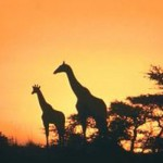 SA still a hit with tourists