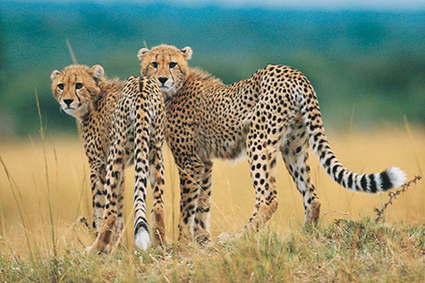 Visa, SA Tourism promote SA Tourism - South Africa Travel